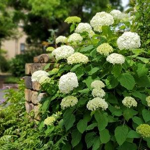 四季の庭 6月の画像