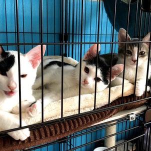 白黒グレー三兄妹❣️幸せ報告!の画像
