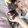 クマという猫。小田さくらの画像
