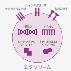ヒト幹細胞培養液に含まれるエクソソームの機能性の画像