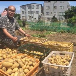 画像 夏の料理に大活躍の野菜の収穫が終わりました の記事より 1つ目
