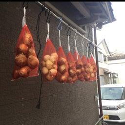画像 夏の料理に大活躍の野菜の収穫が終わりました の記事より 2つ目