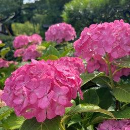 画像 紫陽花の鎌倉を散歩 の記事より 5つ目