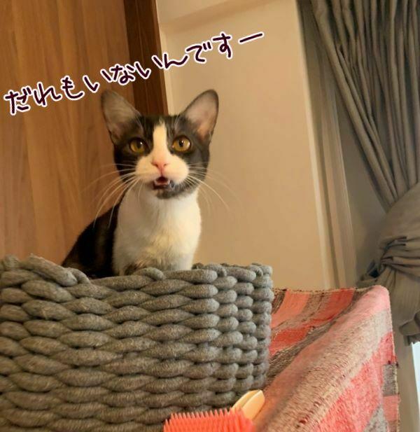 白黒猫のななさんの画像