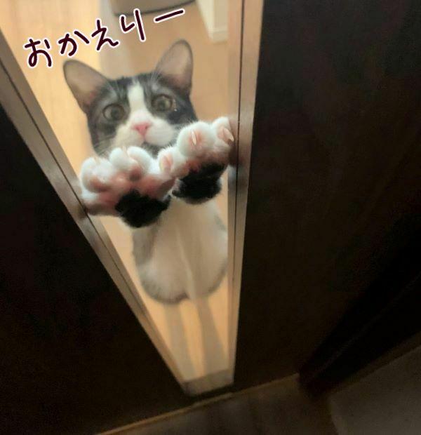 ななさんがドアの前で待っている画像