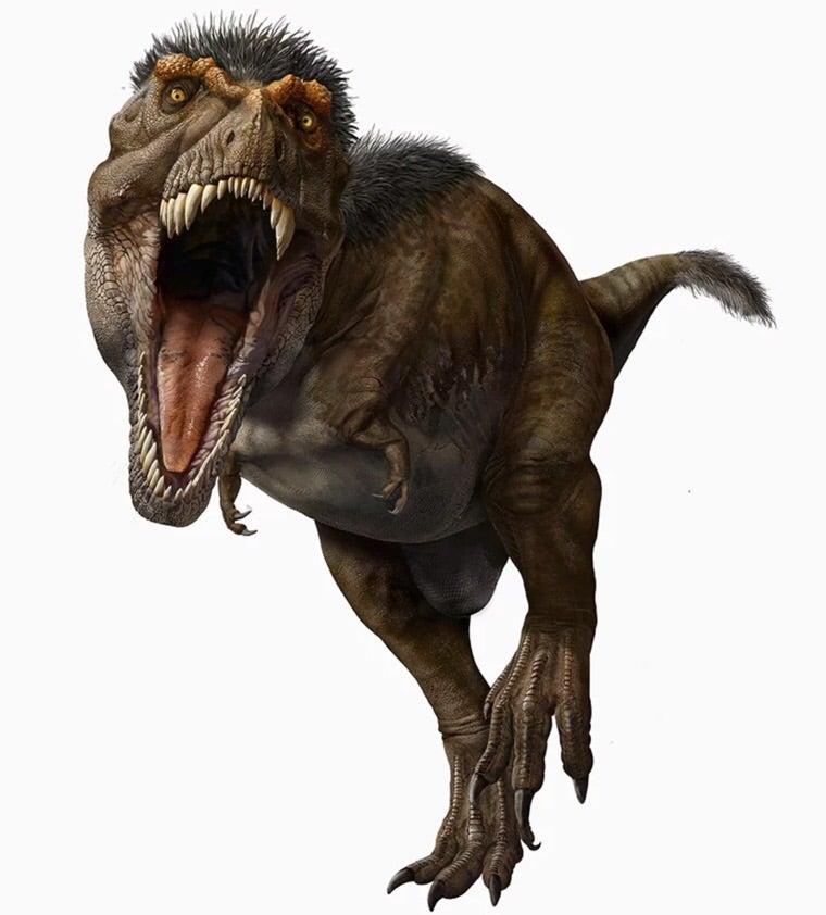 """羽毛 ティラノサウルス ティラノサウルスは羽毛でモフモフだった? 『ダーウィンが来た!』敏腕ディレクターが語る、""""古生物のアップデート""""(リアルサウンド)"""