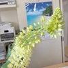 芒種の候の画像