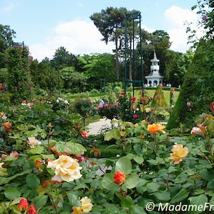 シャクヤクも花盛り パリのバガテル公園の画像