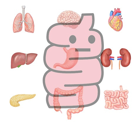 腸・腸内環境