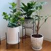 観葉植物の手入れの画像