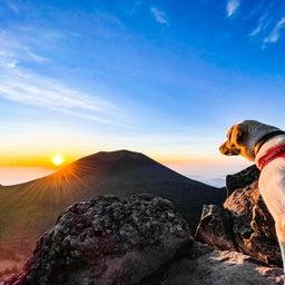 画像 夢の愛犬登山 の記事より 7つ目