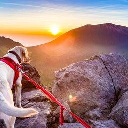 画像 夢の愛犬登山 の記事より 5つ目