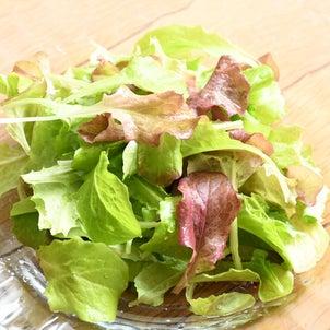朝摘みサラダ。新鮮なうちに朝食での画像