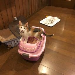 画像 シダちゃん&ダダちゃん、幸せの新しいお家へ♪ の記事より 7つ目