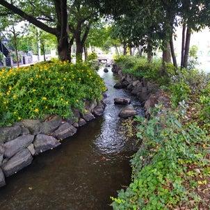 日曜の朝散歩開始(*˘︶˘*).。.:*♡の画像