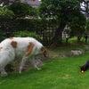 お庭で遊ぶレアちゃんとジェイ君の画像