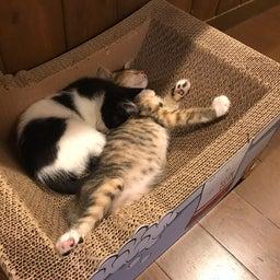 画像 キダくん&ワダちゃん、幸せの新しいお家へ♪ の記事より 10つ目