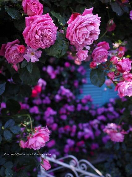 つるバラのアーチ