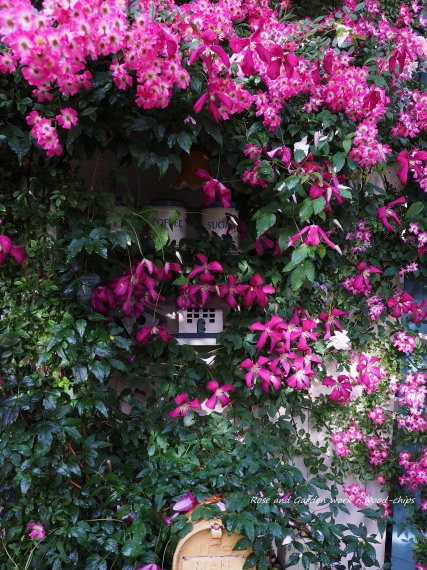 クレマチスとバラ 薔薇