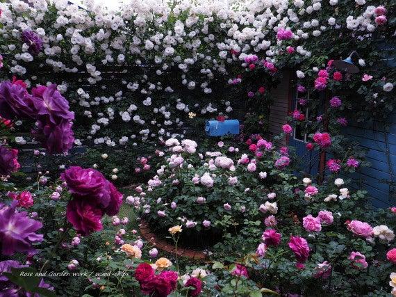薔薇の家 花壇