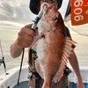 13日鯛ラバ午後便&14日釣果の画像