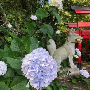 夏越の大祓いの人形と紫陽花 春日神社@三林町の画像