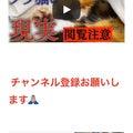 """""""これが野良猫の現実!!"""""""
