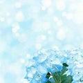 梅雨入り(エンジェル)