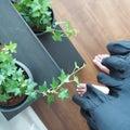 ●植物●リビングのグリーンたち