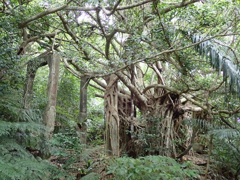 西表島 のぶず 炭鉱遺跡