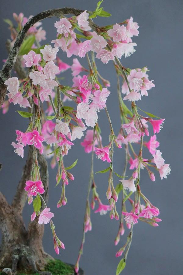 枝垂れ桜 桜 アート盆栽 bonsai