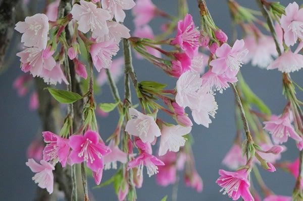 枝垂れ桜 サクラ アート盆栽 盆栽