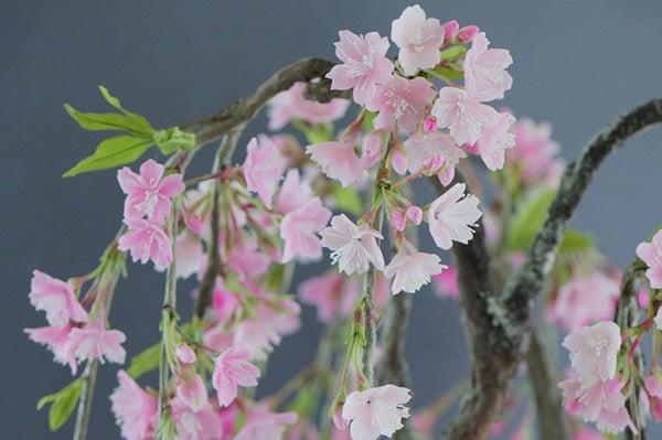 枝垂れ桜 桜 アート盆栽 盆栽