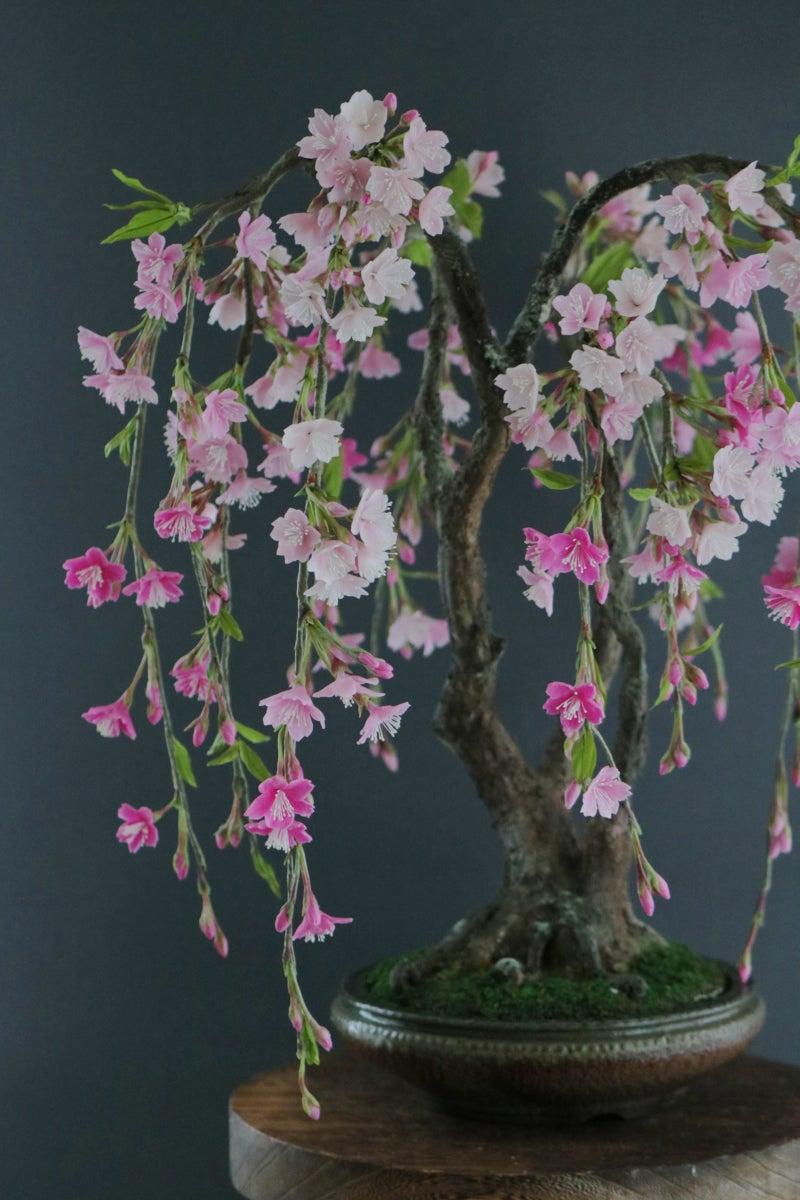 枝垂れ桜 サクラ アート盆栽 桜