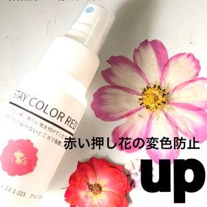 【動画レッスン】赤色の押し花のお花の変色防止方法の画像