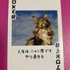 【今日のカード】人生はニャン度でもやり直せる!の画像