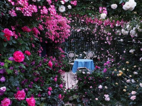 小さな薔薇の家 テラス