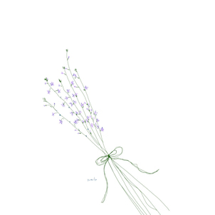 6月16日の誕生花マツバウンラン 何かいいことがありますようにの画像