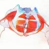 骨盤底筋の問題の画像