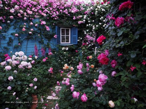 バラの庭づくり 風景