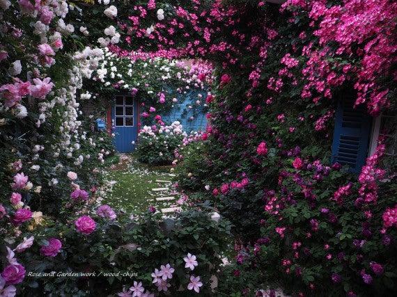 薔薇の家 庭