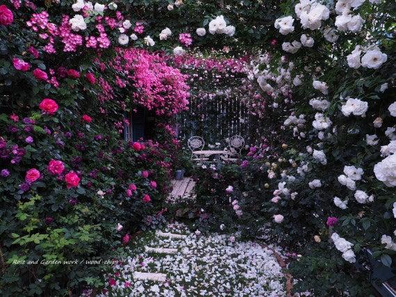 薔薇の家 場所