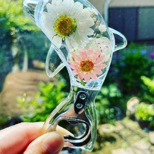 爽やか!お花とイルカのオープナーの画像