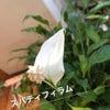 入梅の候の画像