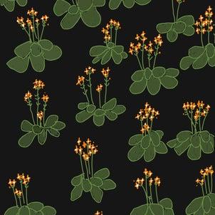 6月17日の誕生花カランコエ(オレンジ) 奇跡をおこせたなら…の画像