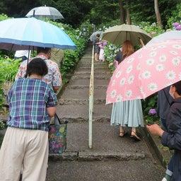 画像 雨の日は紫陽花 の記事より
