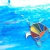 夏~。ウミガメ。の画像