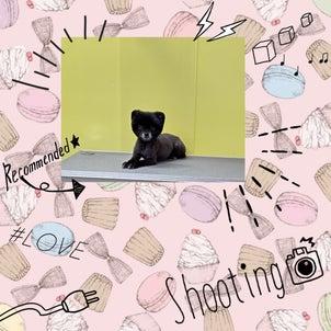 DOGXDOG モコちゃんの画像