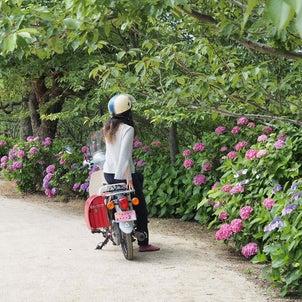 倉敷市の種松山公園へ。あじさいを見に行きましたの画像