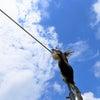 ミナミコアリクイの綱渡り~伊豆アニマルキングダム~の画像